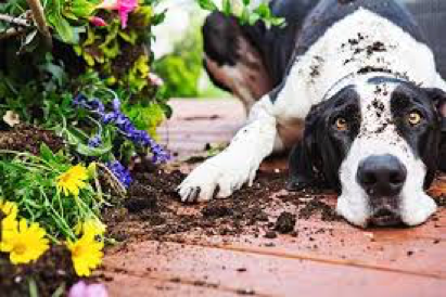 gardening-with-pets