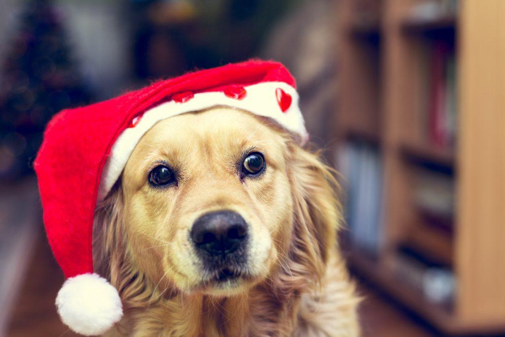 holiday-safety-blog