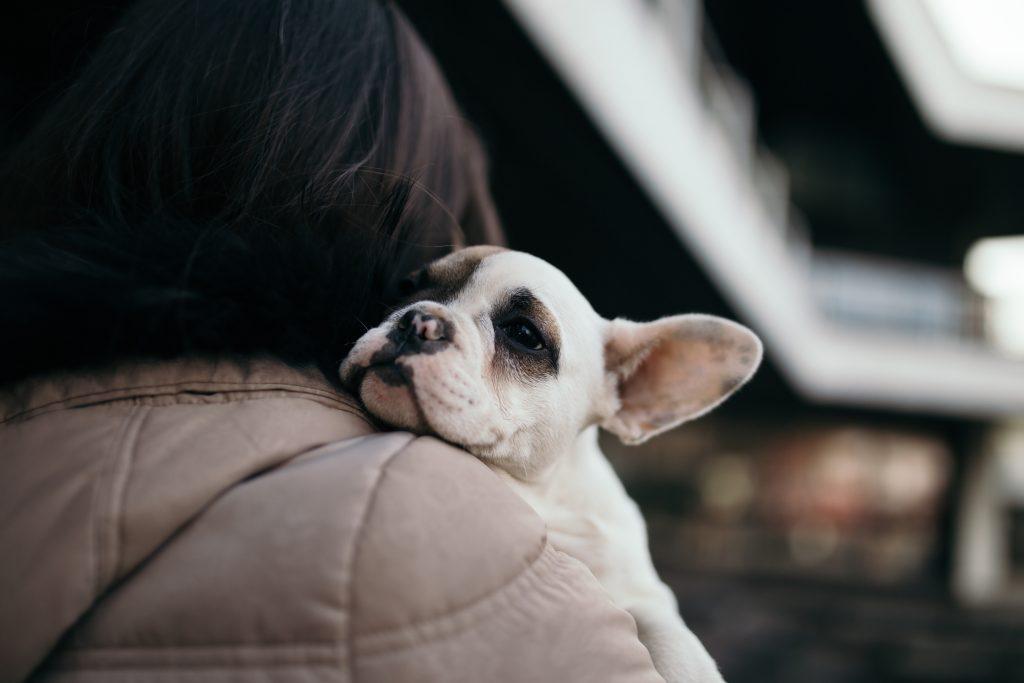 adopting-dogs