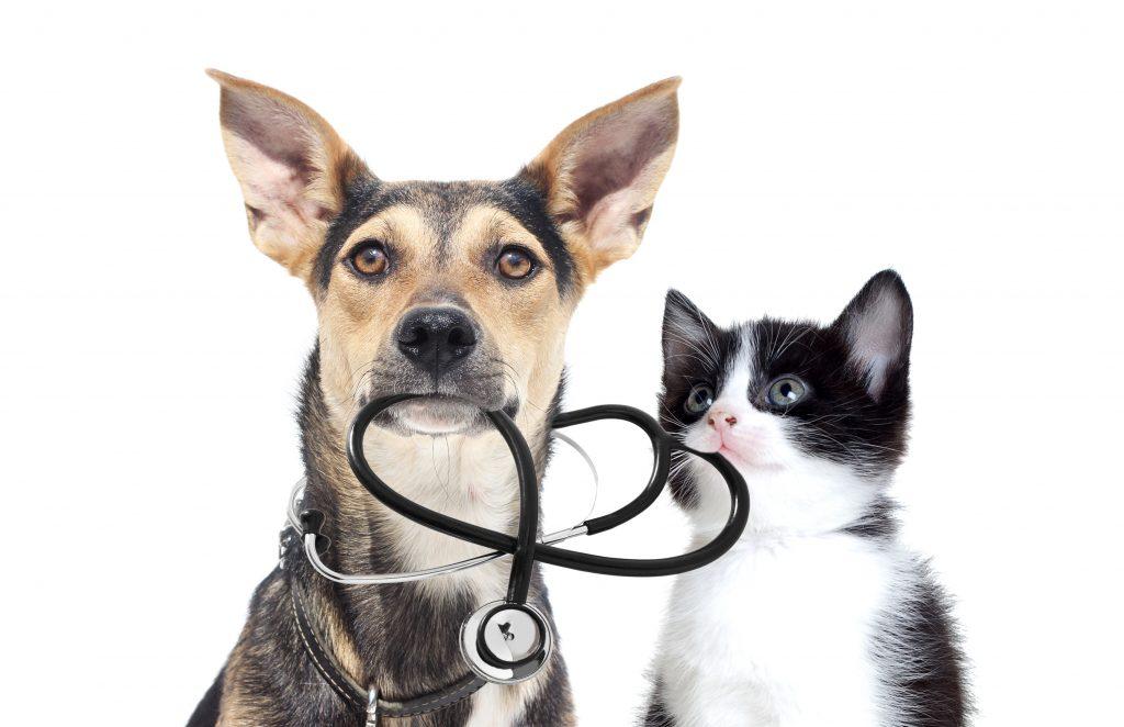 cat dog tick talk