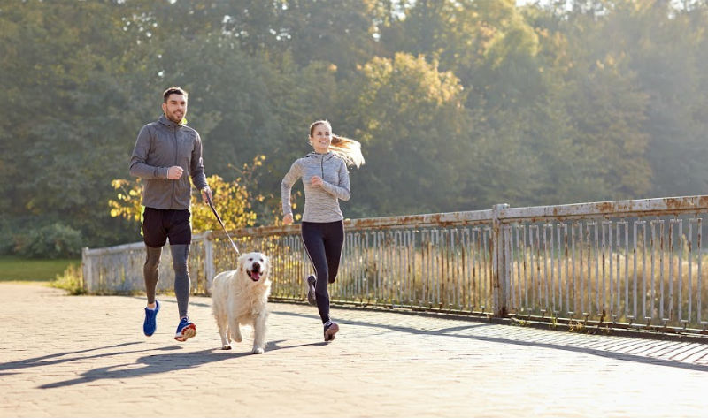 Tips For Exercising With Your Dog