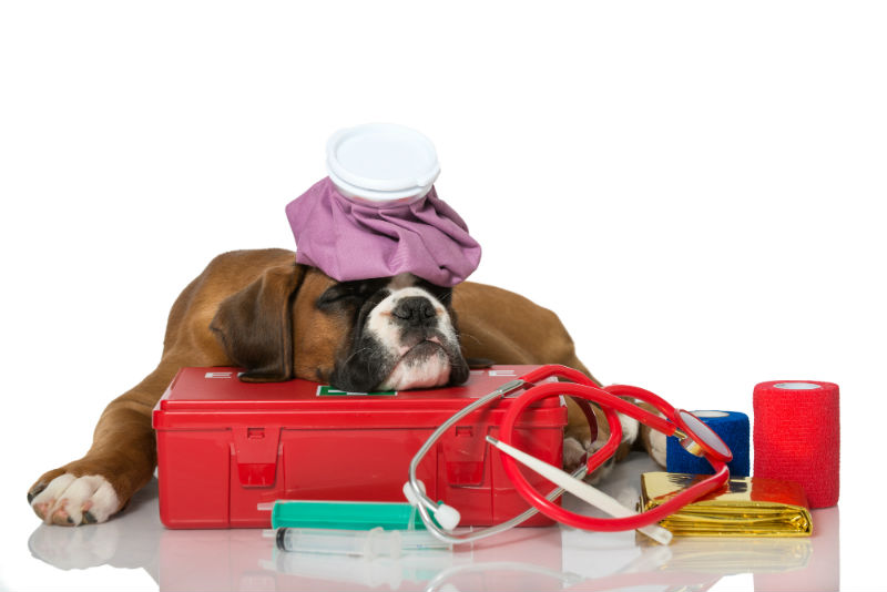Prepping Your Pet S First Aid Kit Van Isle Veterinary