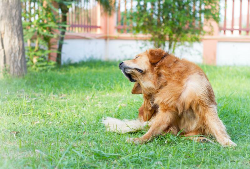 Flea and Tick Treatments