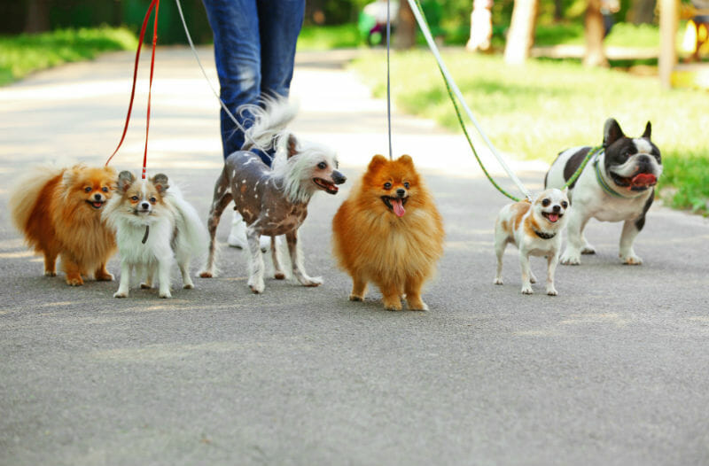 Image result for walking dogs